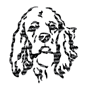 Dog-CockerSpaniel