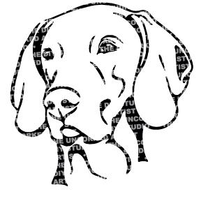 Dog-Weimeraner